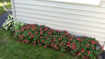 Finger Lakes Vacation Rental Impatiens