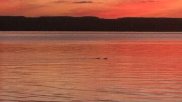 Finger Lakes Vacation Rental Loons at Sunset