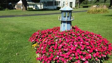 Finger Lakes Vacation Rental Sunpatiens