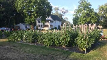 Finger Lakes Vacation Rental Tomato Garden